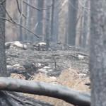 Död i skogsbranden identifierad
