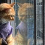 Hade elva katter – trots djurförbud