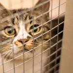 72-åring attackerade kattfångare